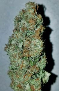 Pineapple Express - Golden Tree